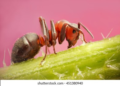 ant close up sitting on a nettle
