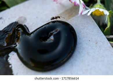Ant crawling on a blob of black paint