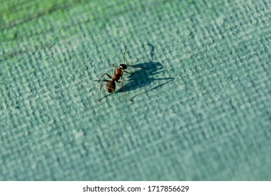 Ant crawling on a painted canvas