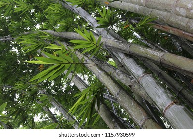 ant eye view of bamboo tree