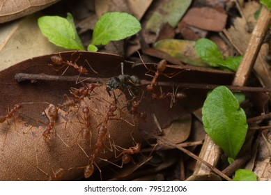 An ant group has been successfully grouped together to fight big insects with a good team to accomplish.