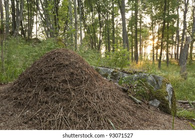Ant hill built by southern wood ant (Formica rufa)