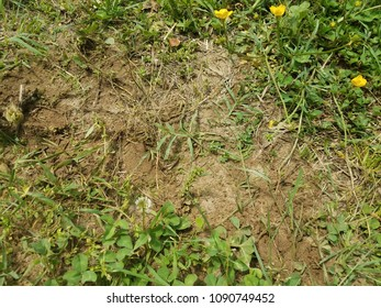 ant hill dirt pile and green grass