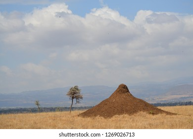 Ant hill on dry African savanna landscape