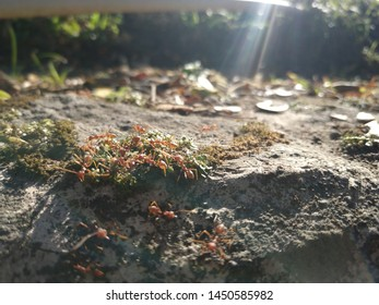 ant hordes in the beautiful sunshine