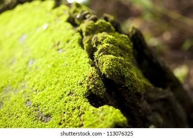 ant house, transparent orange ant walking on green mos carpet