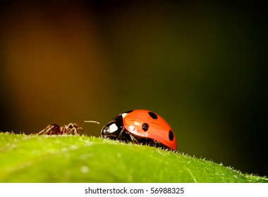 ant meets ladybird