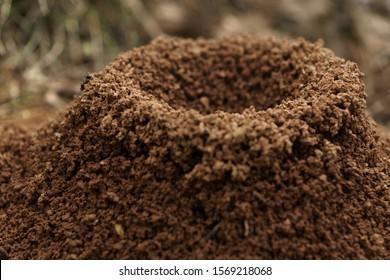 Ant nest cone close view