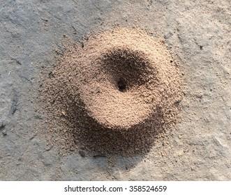 Ant Nest in Nature Environment, Roi Et Thailand