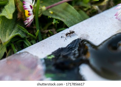 Ant observing a little smudge of black paint