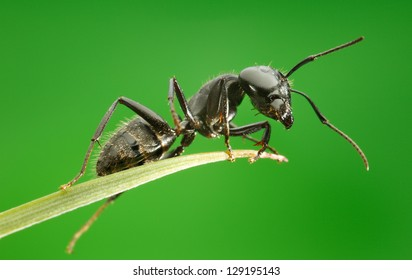 Ant on grass blade over green background, from below view