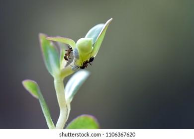 Ant on green leaf macro