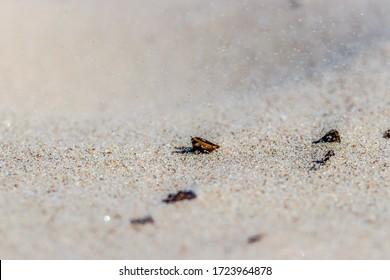 ant on the sand beach