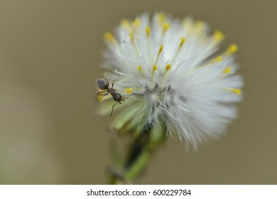 an ant on a white blossom