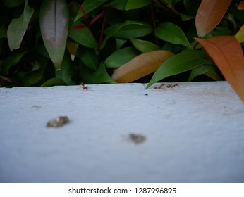 ant on the white wall