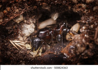 Ant queen with workers and eggs