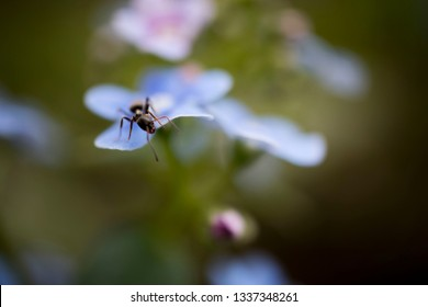 ant sitting on a macro flower