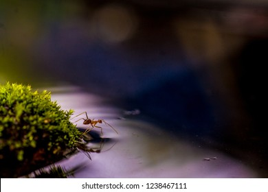 Ant is a small animal commonly found everywhere. This one is a weaver ant. They are known as a great defender of their territory from a stranger. They lived in a group.