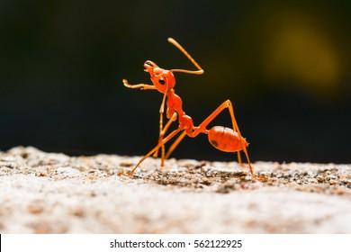 Ant walk