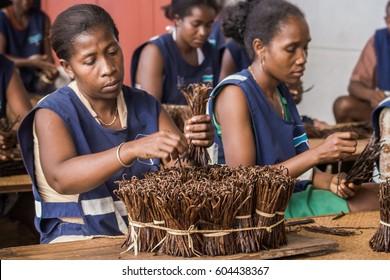 Antalaha, Madagascar, May 20 : Malagasy worker manufacturing vanilla in Antalaha, Madagascar on May 20, 2016