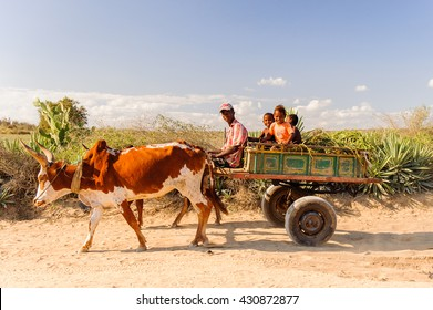 ANTANANARIVO, MADAGASCAR - JULY 3, 2011: Unidentified Madagascar man rides the cow carriage with his children. People in Madagascar suffer of poverty due to slow development of the country