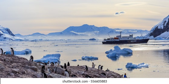 Antarctic cruise ship among icebergs and Gentoo penguins gathered on the shore of Neco bay, Antarctica