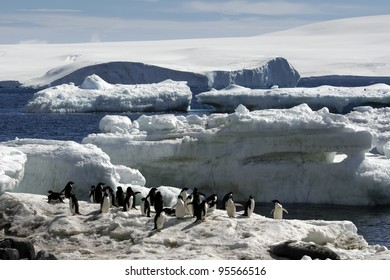 Antarctic Expedition (Adelie Penguin)