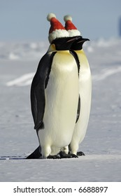 Antarctic penguin couple celebrates Christmas