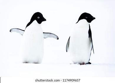 Antarctic Stock 2018
