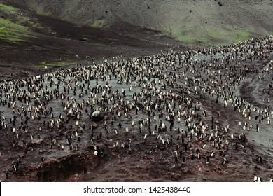 Antarctica Antarctic Peninsula Deception Island Half Moon Georgia Outpost Chinstrap Adele Gentoo Penguins Penguin Colony Seals Wildlife King Emperor Birds Polar Animals Cold Wild Life Creatures