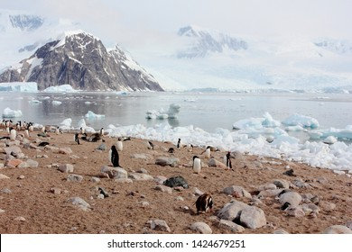 Antarctica Antarctic Peninsula Port Charcot Outpost Chinstrap Adele Gentoo Penguins Elephant Seals Isolated Iceberg Icebergs Mountains Lens Flare  Winter Snow Ice Wintry Frozen Cold Icicle Icey Icy