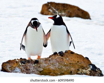 Antarctica, penguins /  Let's be friends
