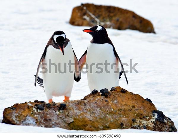 Antarctica, penguins /  Let's be friends