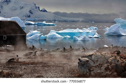 Antarctica, penguins, and the southern ocean