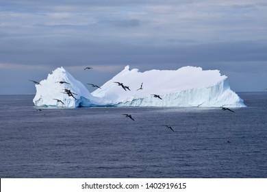 Snow Petrel Images, Stock Photos & Vectors | Shutterstock