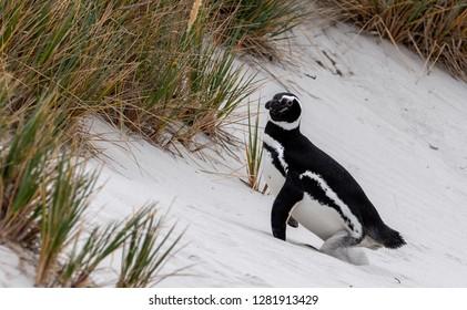 Antartic 2018 Pinguins