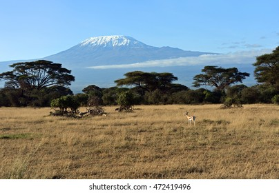 Antelope Grant Amboseli National Park in Kenya. Kenya