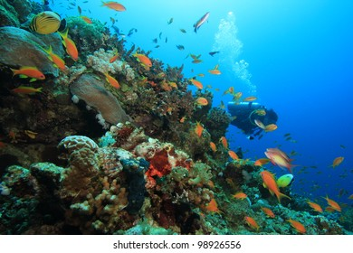 Anthias (goldfish) and a scorpion-fish are in the foreground with a scuba diver coming into view around the reef