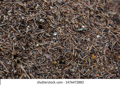 Anthill. An ant colony (background close-up). Formica rufa, also known as the red wood ant, southern wood ant, or horse ant.