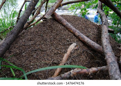 Anthill. An ant colony in a wood. Formica rufa, also known as the red wood ant, southern wood ant, or horse ant.