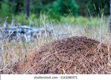 Anthill (Formica rufa, red wood ant, southern wood ant, horse ant)
