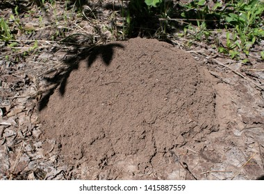 anthill in green grass. forest
