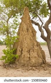 Anthill in Mali
