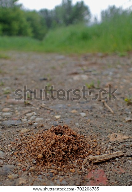 Anthill on the road, in edge of the forest