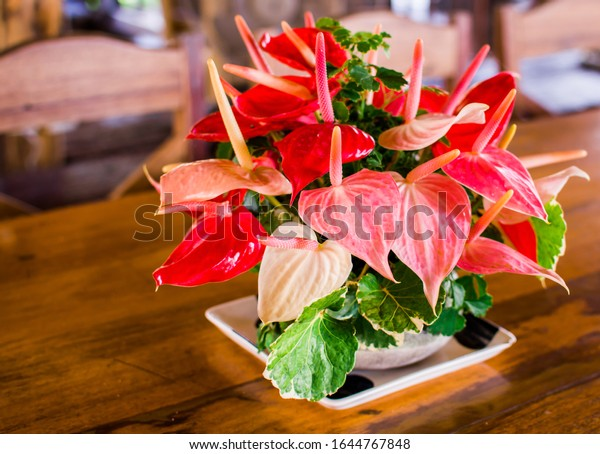 Anthurium is a red heart-shaped flower decorated in a vase. Anthuriums have come to symbolize hospitality.