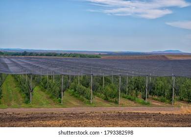 Anti hail systems with concrete poles. Apple plantation, fruit production.