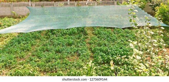Anti-hail net to protect plants from hail