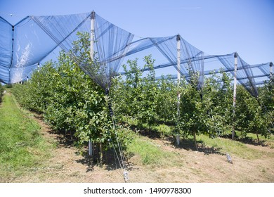 Hail Protection Images Stock Photos Vectors Shutterstock