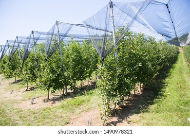 Anti Hail Net Images, Stock Photos & Vectors | Shutterstock