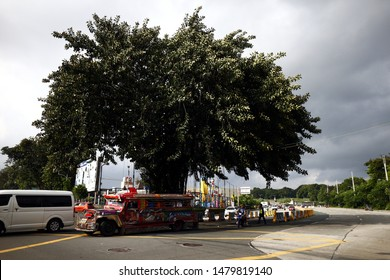 ANTIPOLO CITY, PHILIPPINES – AUGUST 12, 2019: A preserved and protected old Balete tree stands in the middle of the road.
